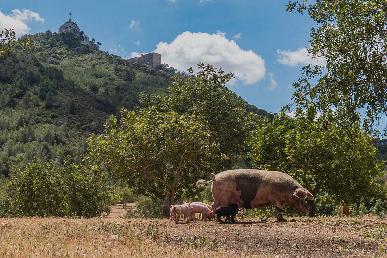 Sobrasada de Mallorca